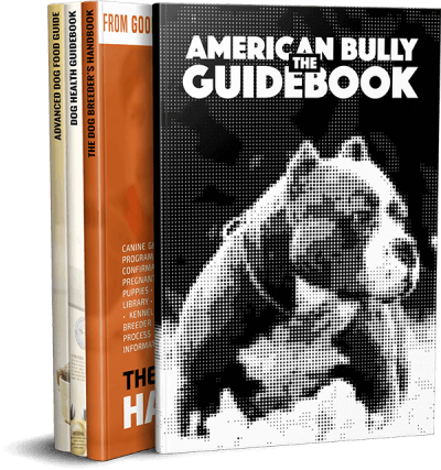 american bully guide