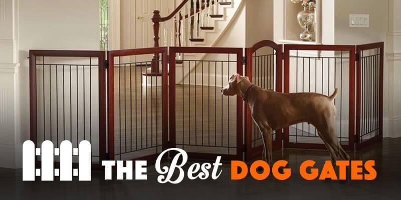 Best Dog Gates & Puppy Doors