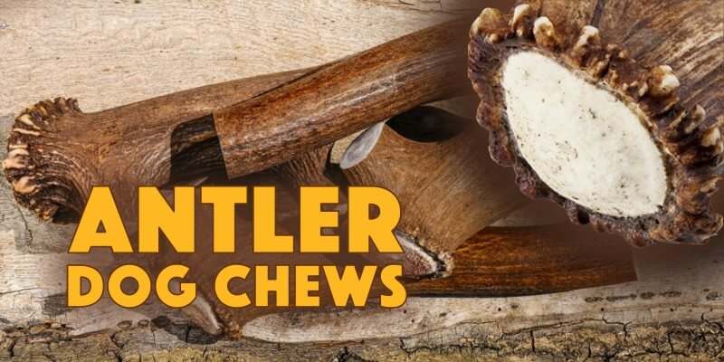 antler dog chews for dogs