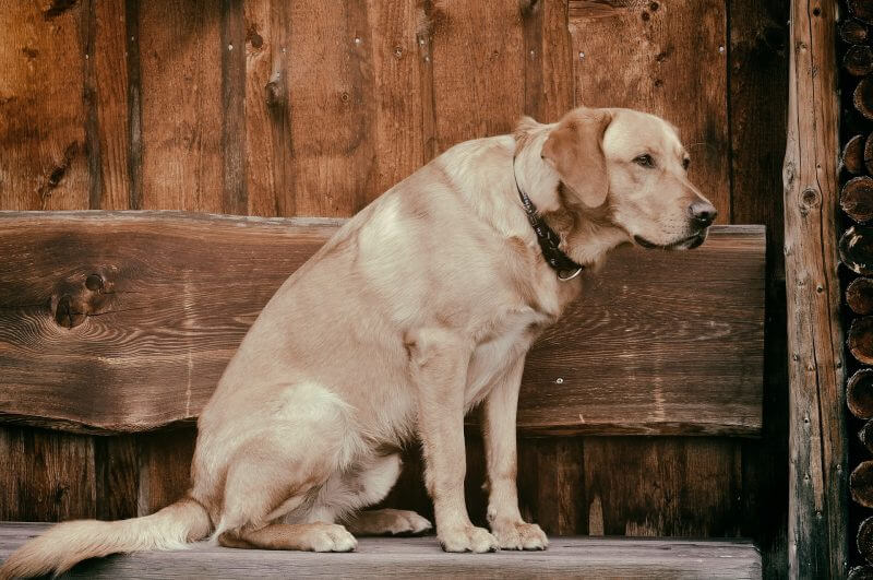 MSM and Glucosamine supplements for old dogs