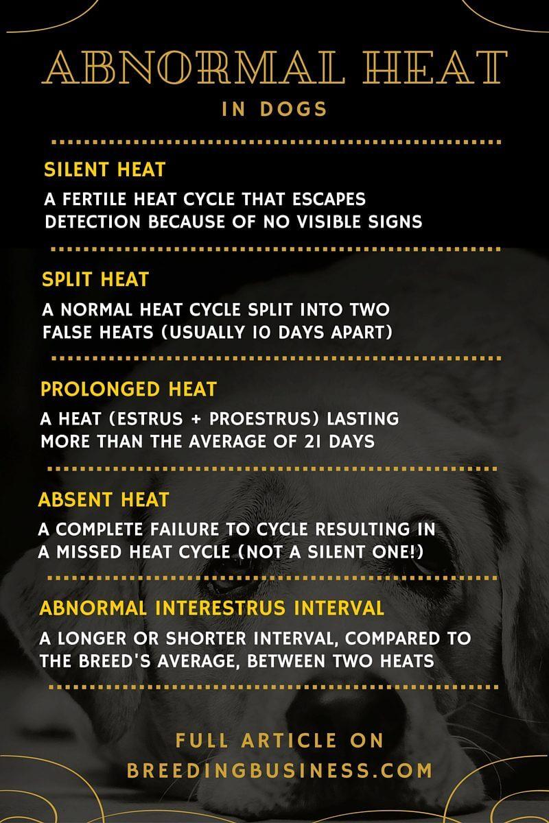 abnormal heat in dogs