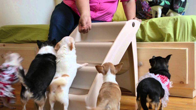 training dog steps
