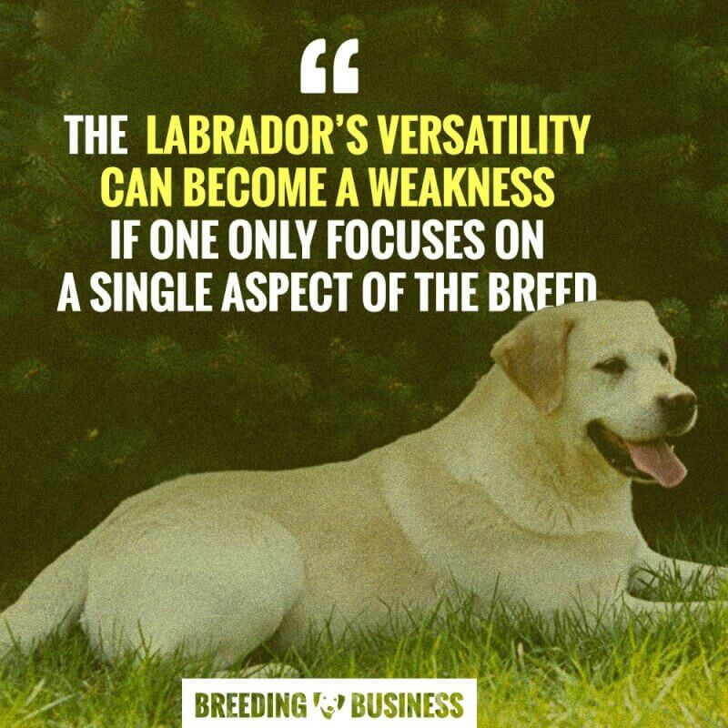 labrador retriever breeding varsatility