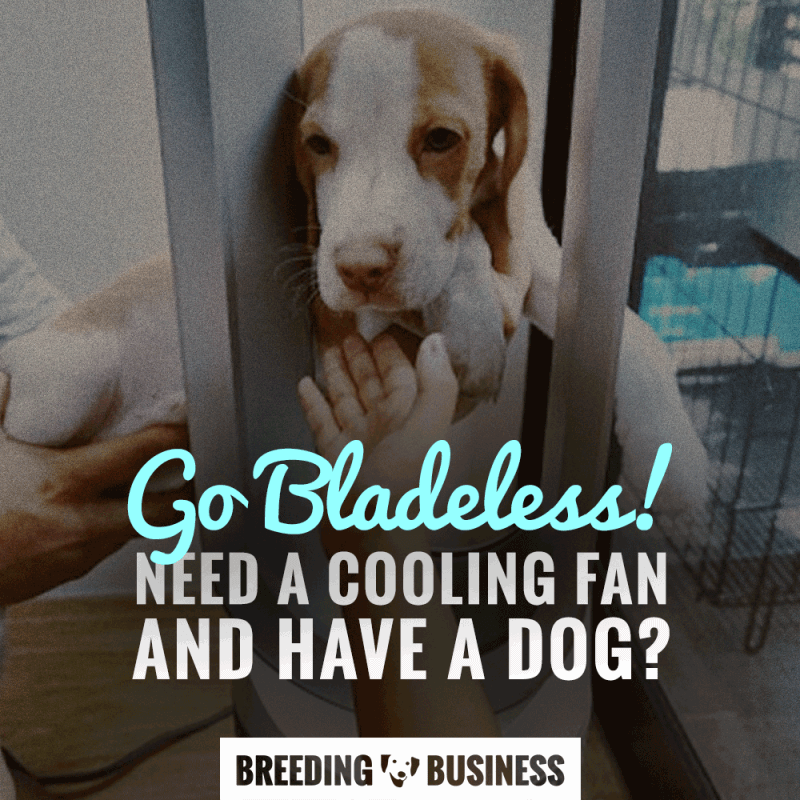 bladeless dog fan
