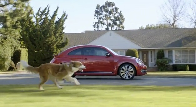 dog chasing a car