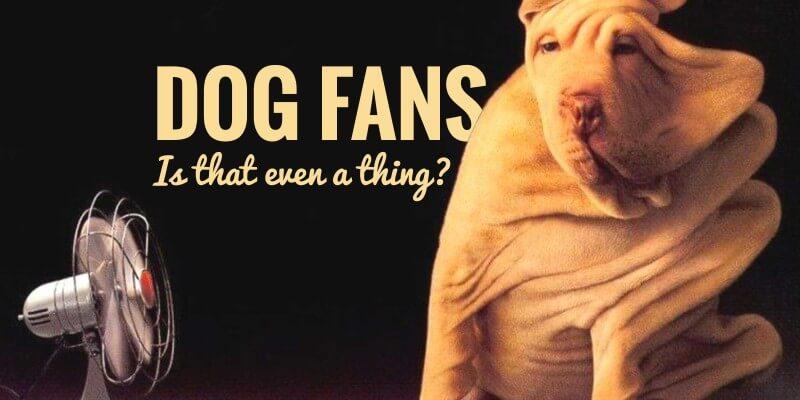 dog fans