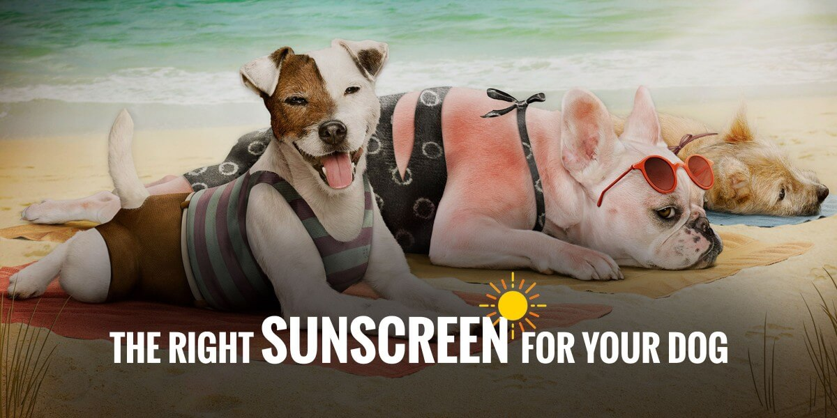 sunscreen for dogs australia