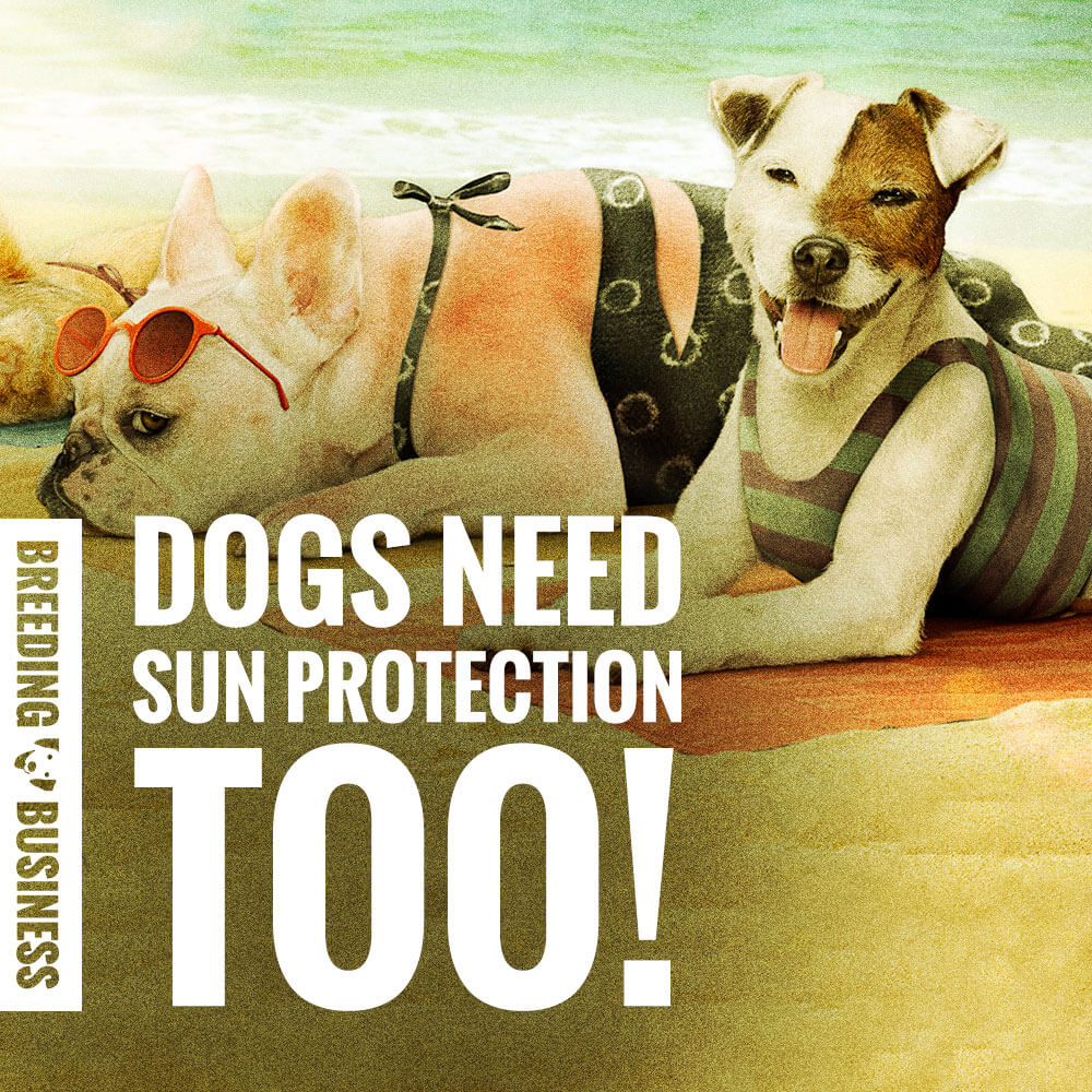 sunscreen for dogs