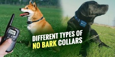 no bark collars for dogs