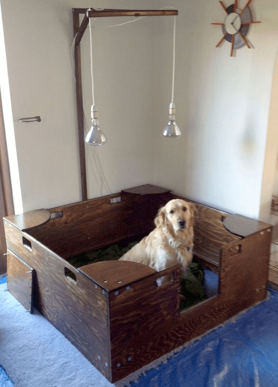 whelping box with incandescent lamps warmth