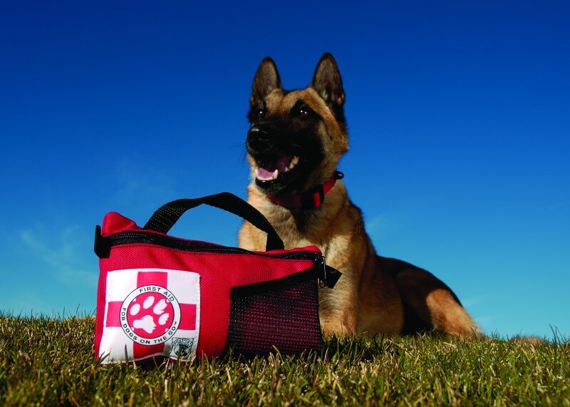 dog first aid kit on the grass