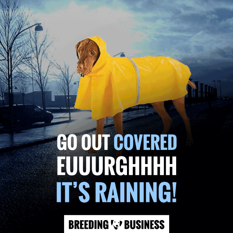 dog rain jacket parka