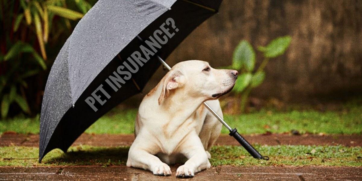 pet insurance for dog breeders