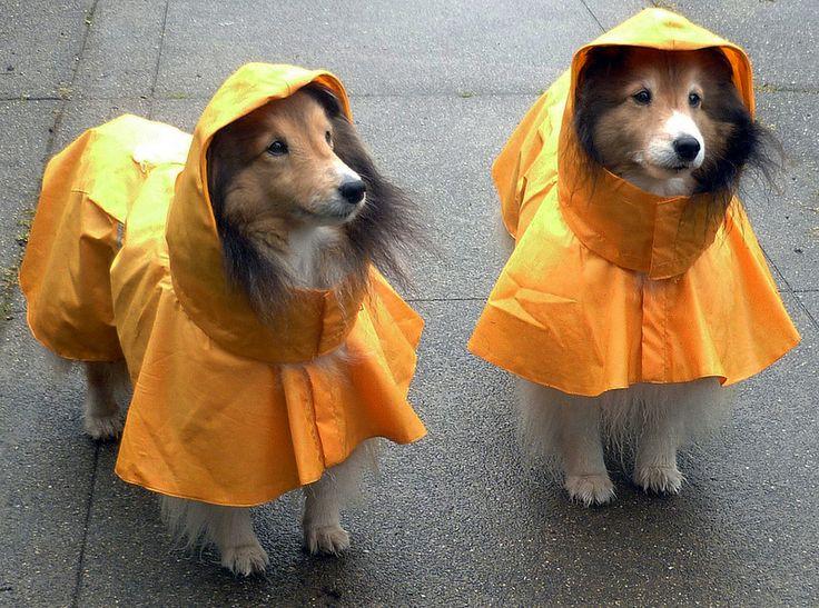 hooded dog raincoat
