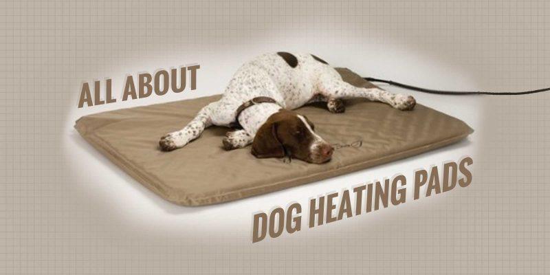 dog heating pads