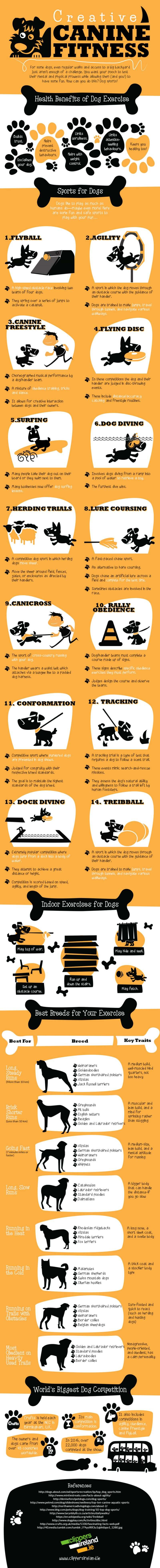 Workout Ideas for Dogs