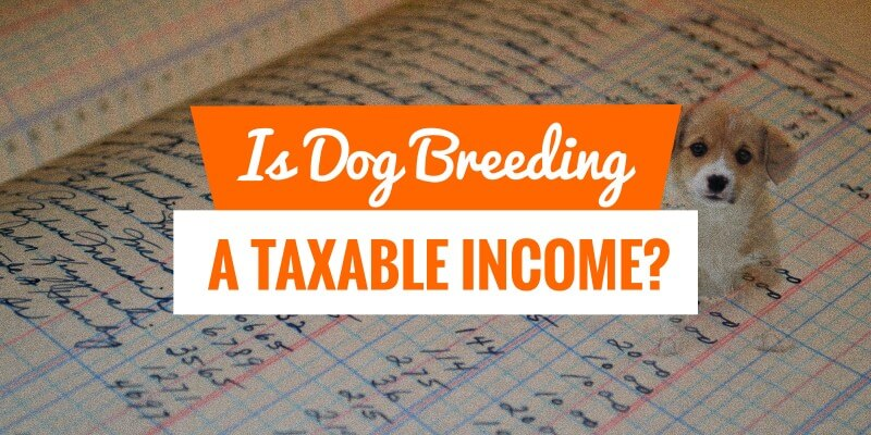 is dog breeding taxable income