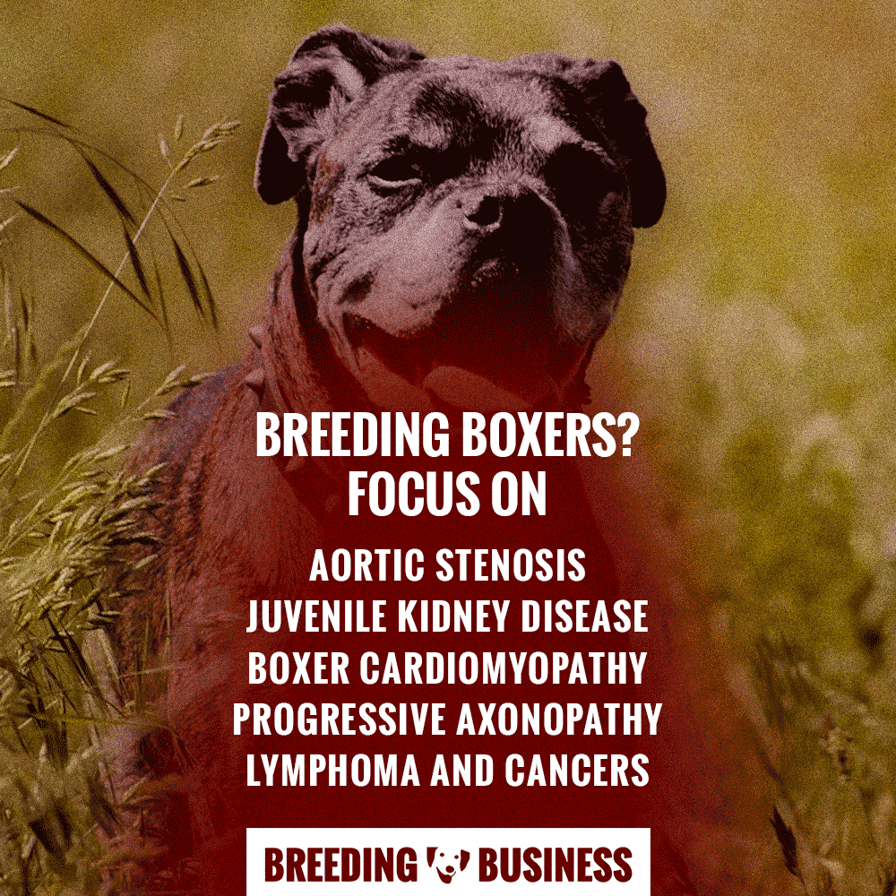 diseases particularly affecting Boxers
