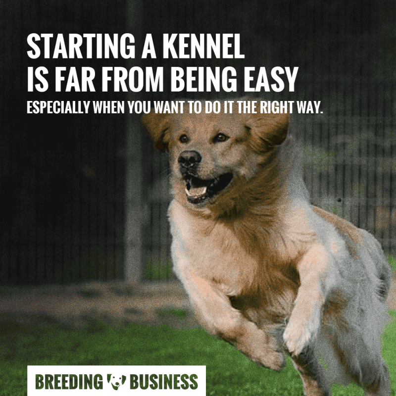 Starting a kennel is hard!