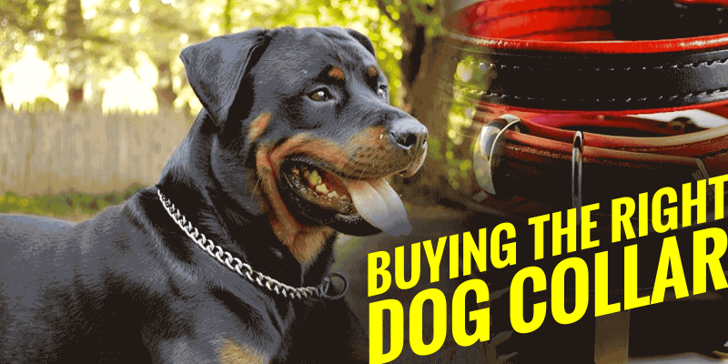 buying the right dog collar