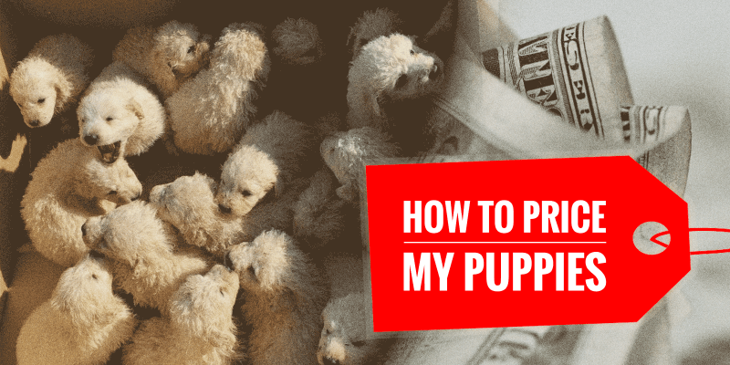 How To Price My Puppies Right