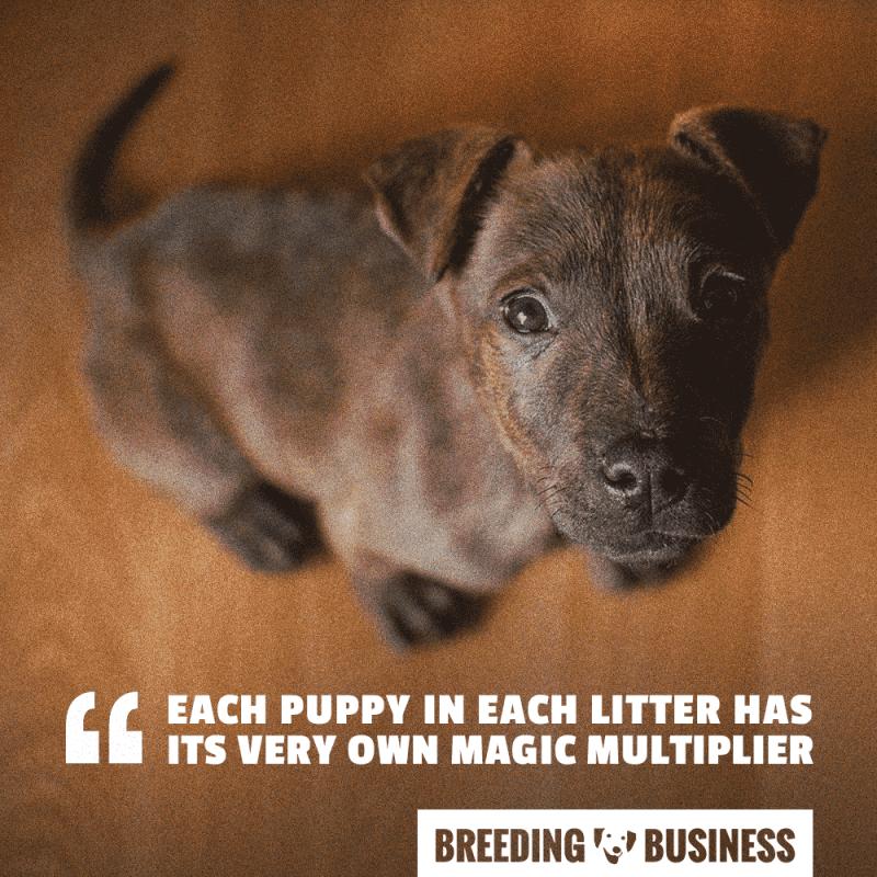 pricing puppy magic multiplier