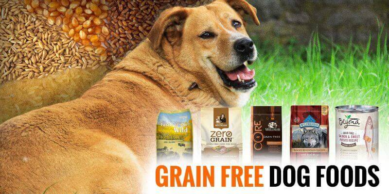 Best Grain-Free Dog Foods