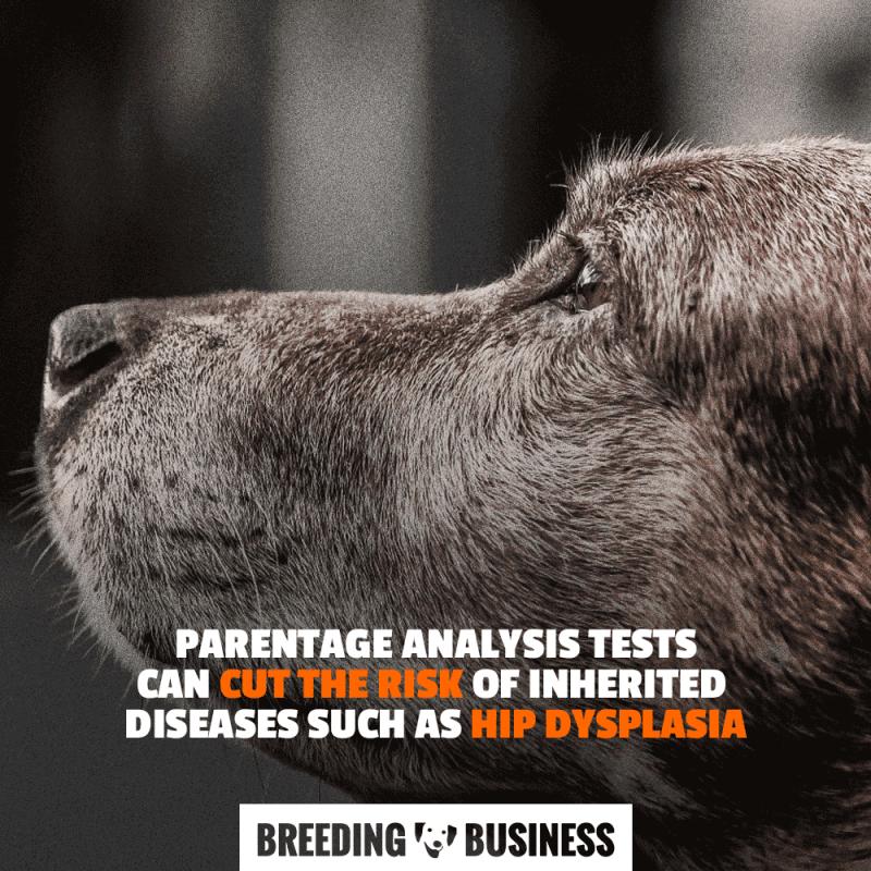 parentage analysis risk hip dysplasia in dogs