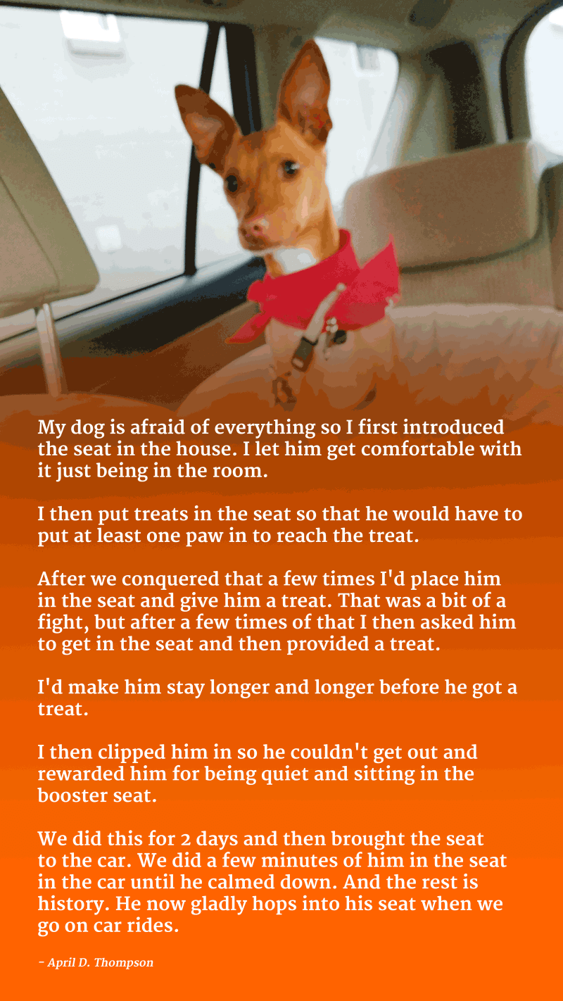 dog car seat training