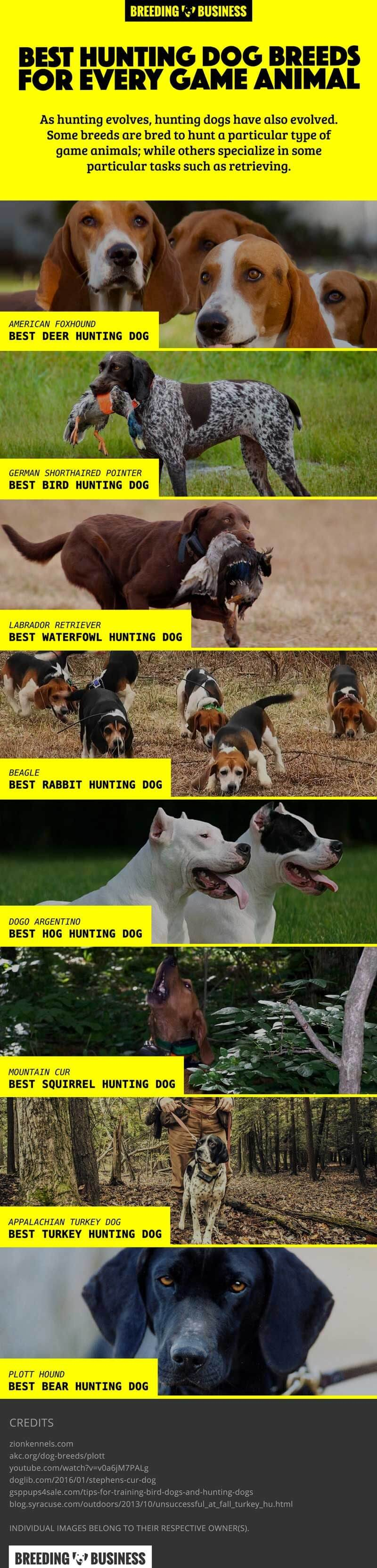 Infographic: Best Hunting Dog Breeds For Game Hunting