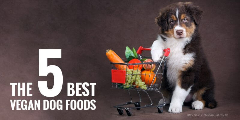 Best Vegan Dog Foods