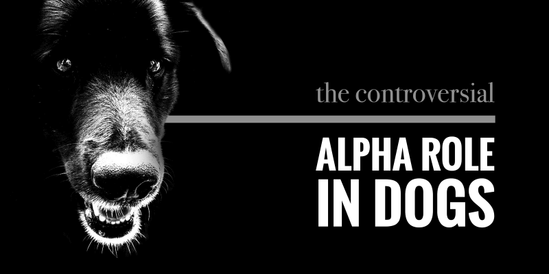 Alpha Role In Dogs (Alphamale)