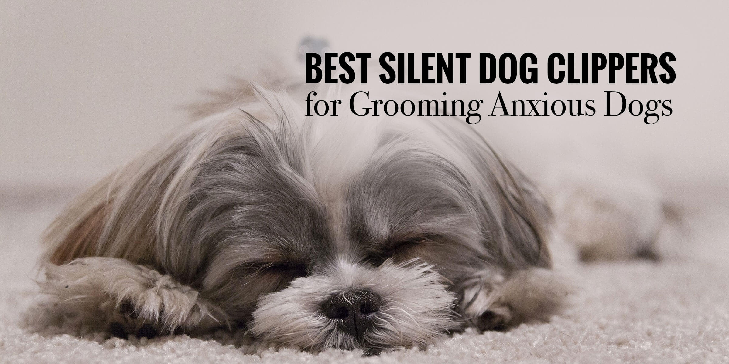 Top 12 Best Silent Dog Clippers for Grooming Anxious Dogs