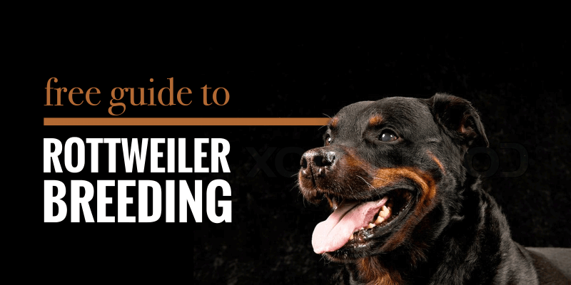 Guide to Breeding Rottweilers
