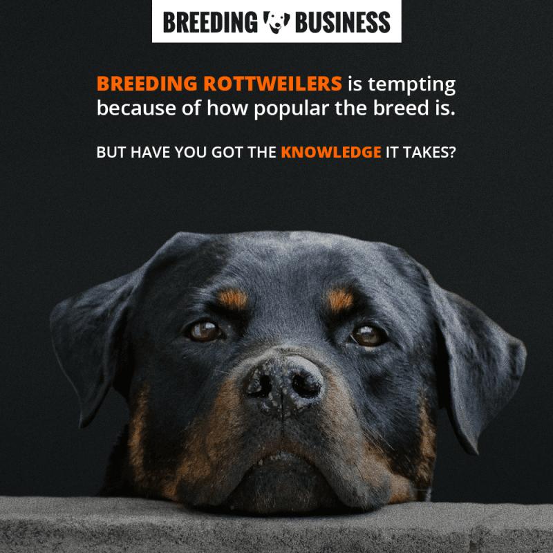 breeding rottweilers