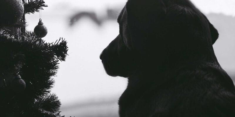 Do Female Dogs Go Through Menopause?