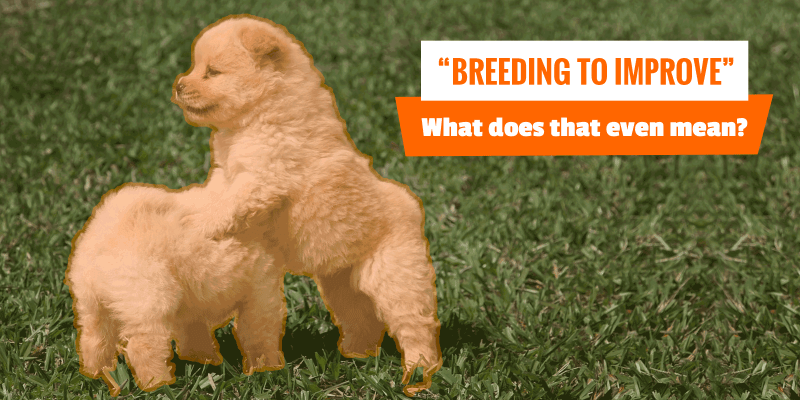 Breeding dogs to improve the breed.