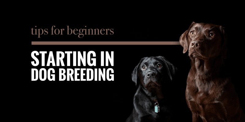 Tips For Beginners Starting In Dog Breeding