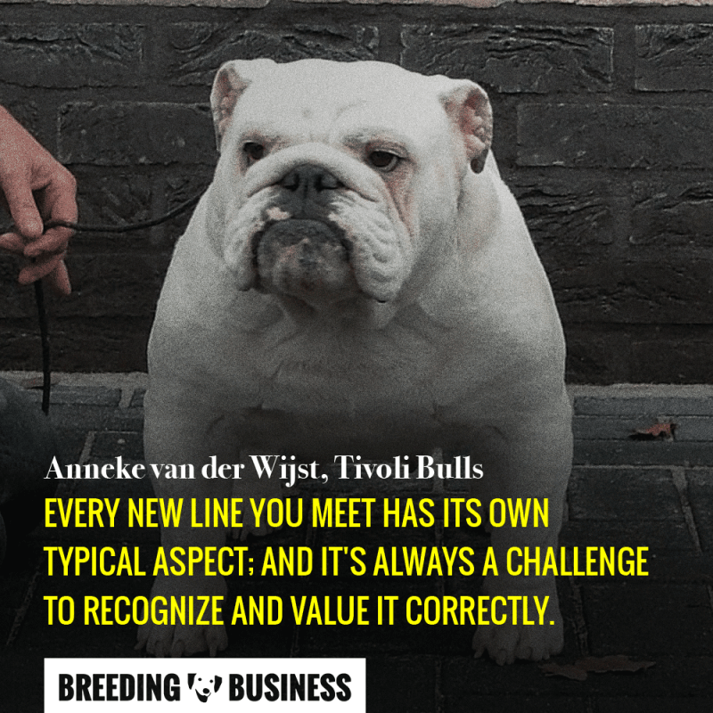 Breeding bulldogs requires you to project yourself few generations down the line. Your decisions do have consequences.
