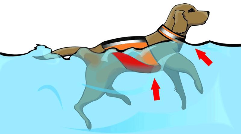 dog life vest floatation material and buoyancy