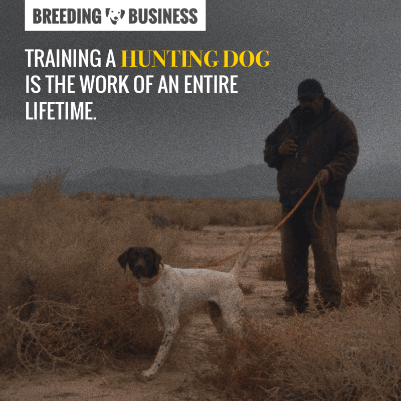 Hunting dogs cannot be trained following a clear set of guidelines. You need to bet on your dog's strengths and create a strong bond.