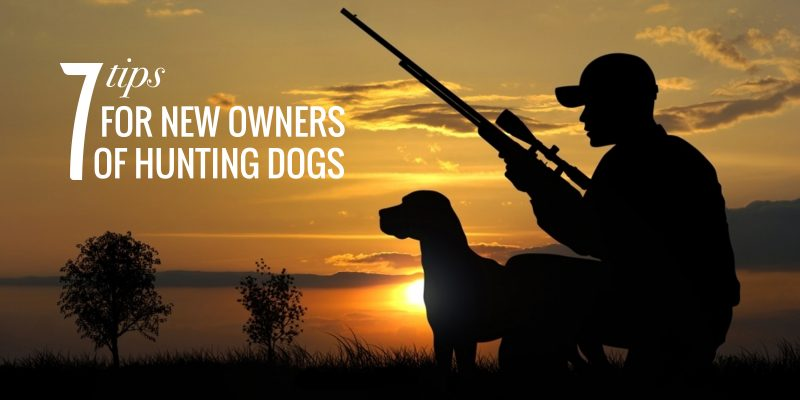 Tips For Hunting Dog Owners