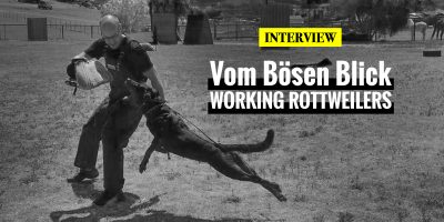 Interview with Vom Bosen Blick Rottweilers