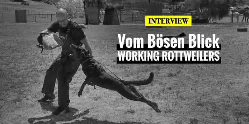 Interview with Vom Bosen Blick Rottweilers