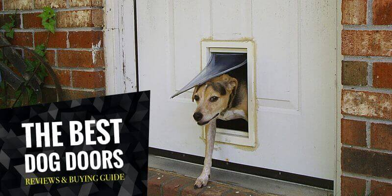 Best Dog Doors Review