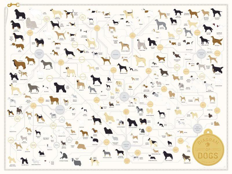 List of Dog Breeds (chart)