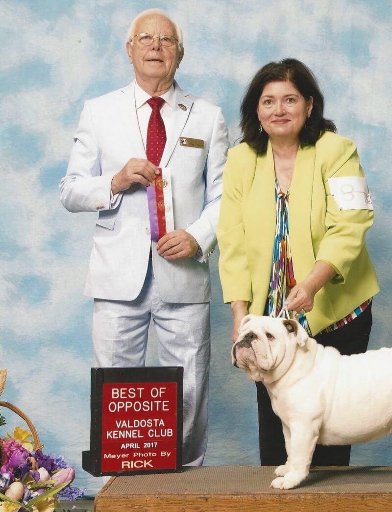 english bulldog dog show