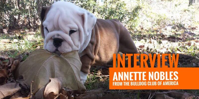 Interview with Annette Nobles from the Bulldog Club of America