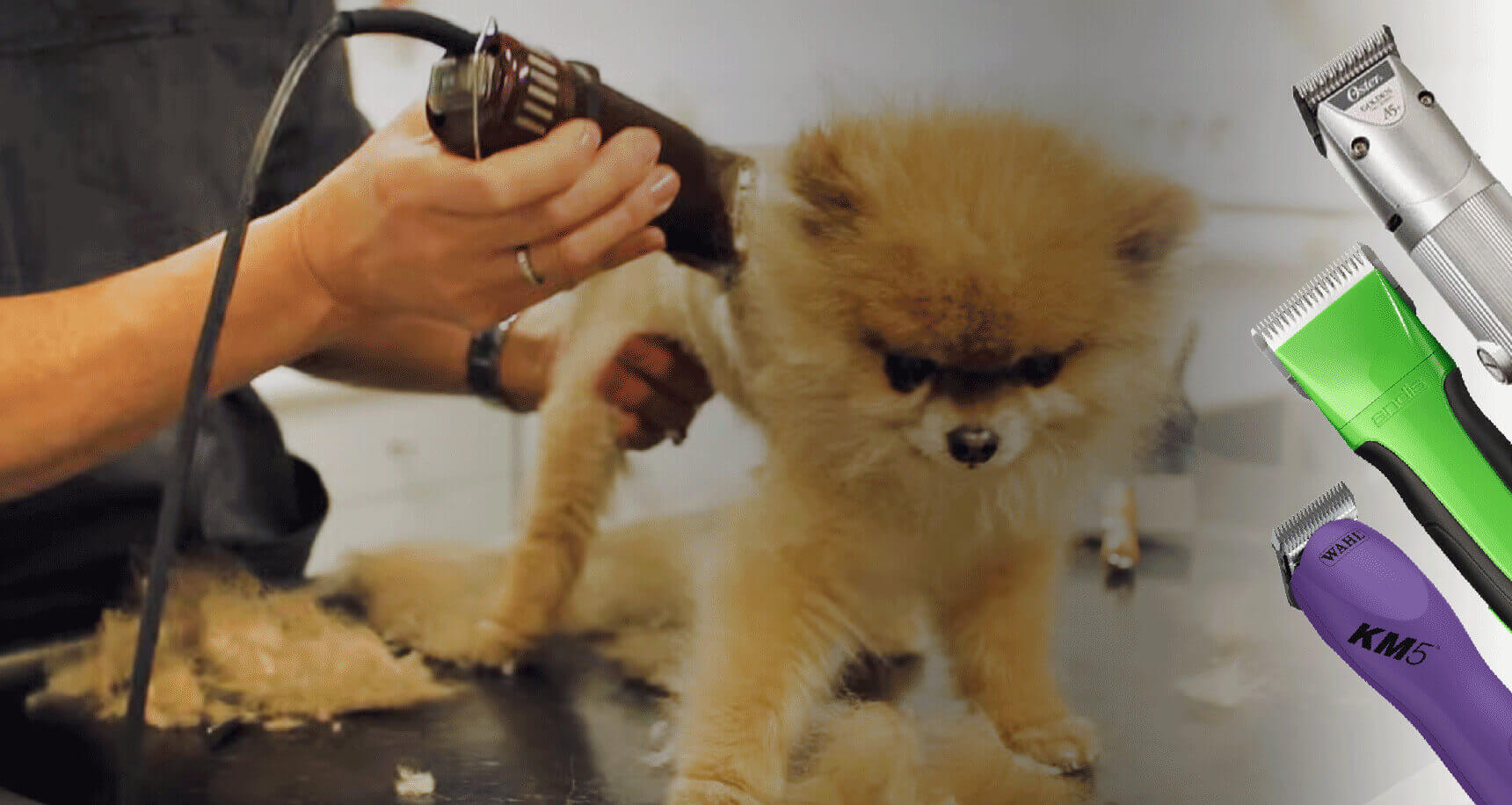 10 Best Dog Clippers for Professionals + 10 Buying Guide!