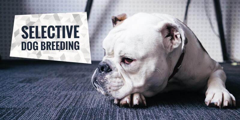 Selective Dog Breeding